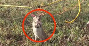 Denne rotta redder menneskeliv hver dag. Du kommer aldri til å gjette hvordan.