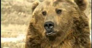 Denne mannen har en bjørn som kjæledyr.