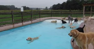 Det finnes bare en måte å feire en hundebursdag på - sånn som dette!